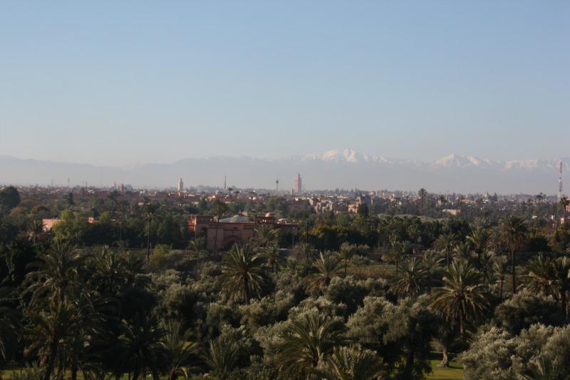 Marrakech, la palmeraie, vue sur l'Atlas
