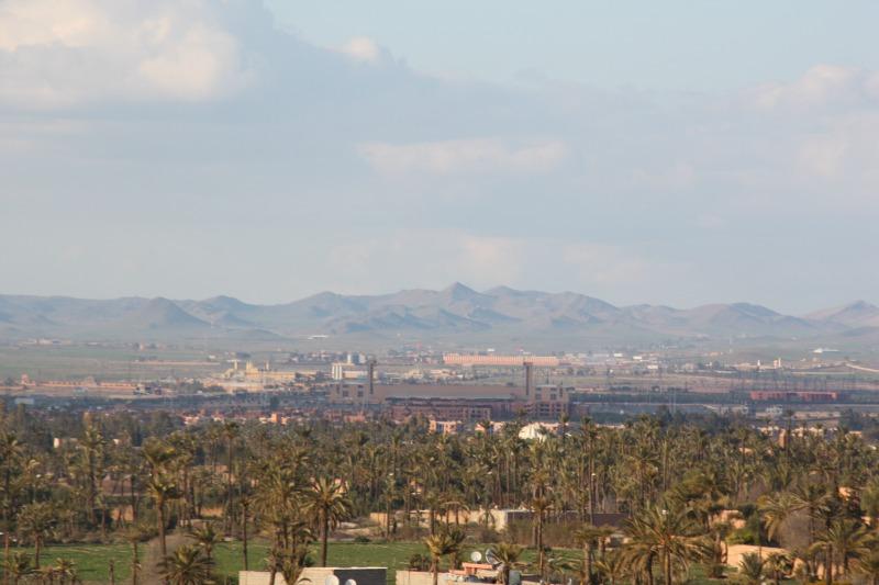 Marrakech, vue de la palmeraie