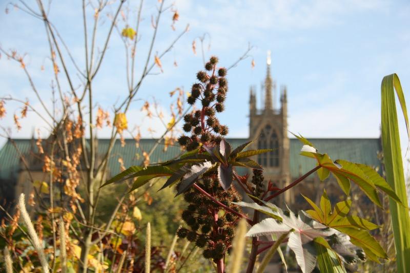 jardin éphémère place de la comedie cathedrale metz